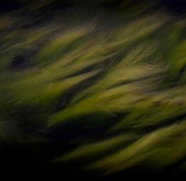 Sea Weed 1
