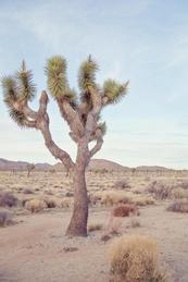 Desert Song #2