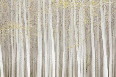 Poplar Forest Study