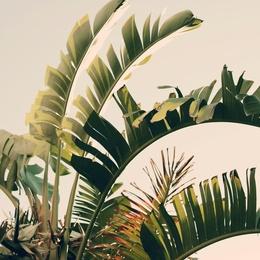 Tropic Sky
