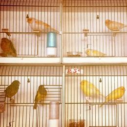 Marché Aux Oiseaux II