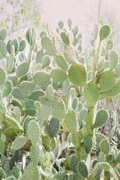 Cactus Garden #4