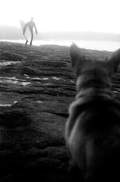 Bawley Dog