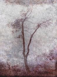 Misty XI