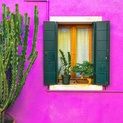 Fuschia Wall