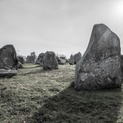 Sheep and Carnac Stones - Carnac, France