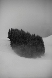 Mountain Trees #3