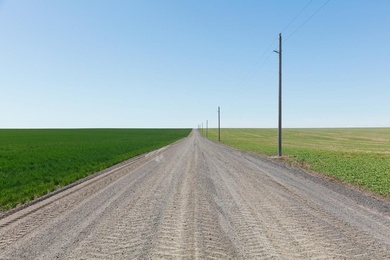 Spring Wheat Field and Road