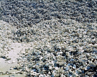 Oysterscape #2