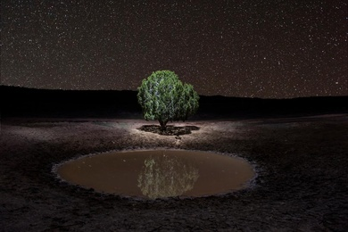 Lone Tree Pond