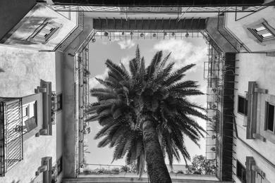 Palermo Tree