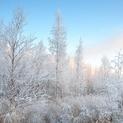 Frozen December