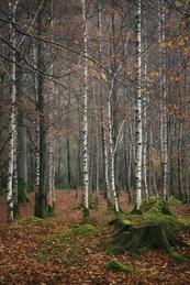Penny Rock Wood - Grasmere - 3