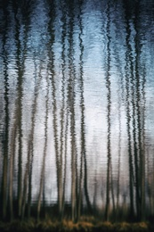 Water Trees