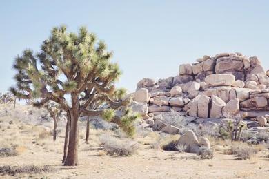 Wild West #3