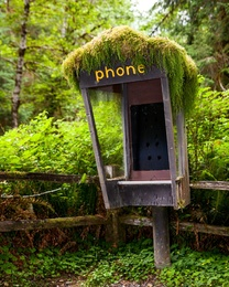Forest Phone - III
