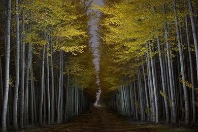Autumn at the Tree Farm X