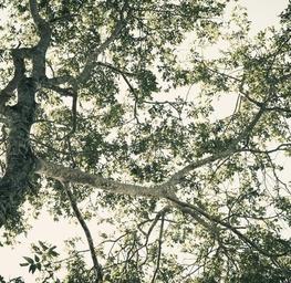 Tree of Life - Tulum