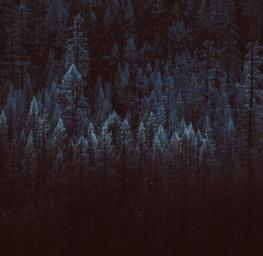 Treeline 6