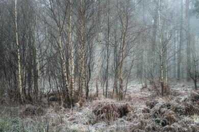 Hay Woods - 4