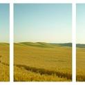 Farm Road Triptych