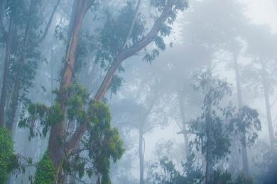 Presidio Fog