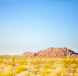 Dreamscapes, Desert Meadow