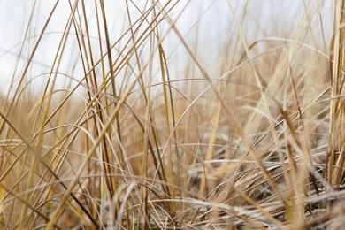Sea Grasses V