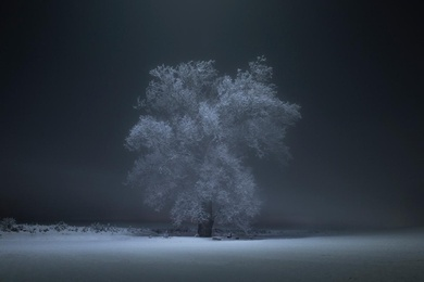 The Haloed Tree #1