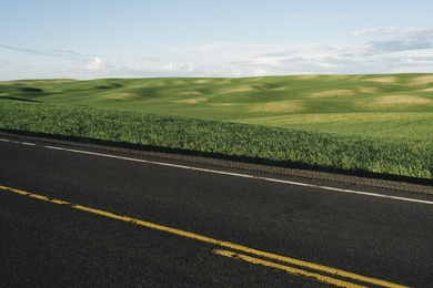 Palouse Road and Wheat Field