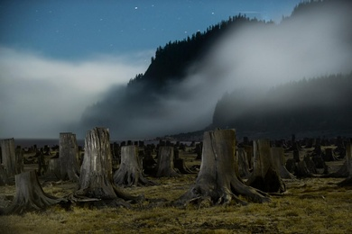 Forest of Ghosts