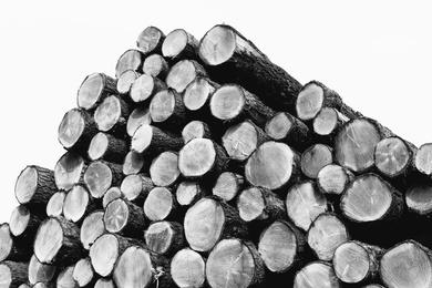Wood Pile V