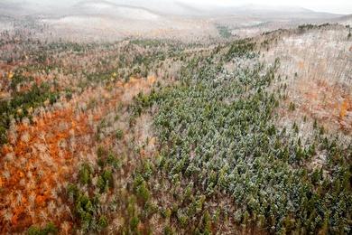 North Maine Woods I