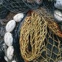 Fishnet Study #3