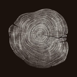 Stump1 - Variation 23