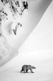 Polar Bear and Mountain, Svalbard