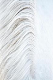 White Horse 13