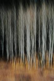 Aspen Abstract IV