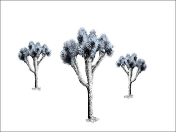 Desert Bliss, Blue