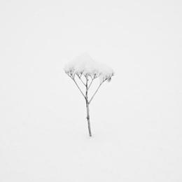 Snow Shapes Study 5