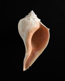 Shell #5