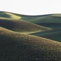 Palouse Hills X