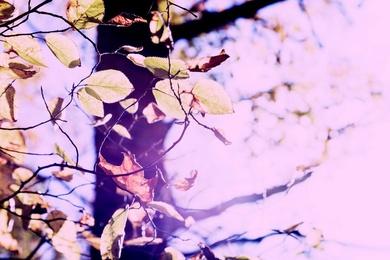 Yellow Leaf 5435