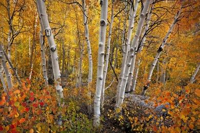 Eastern Sierra Nevada Fall Color