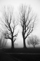Milano Fog
