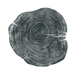 Stump 1 - Variation 1