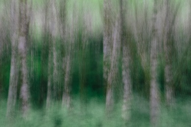 Alder Forest Abstract II