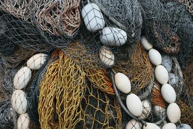 Fishnet Study #8
