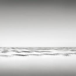 Oyster Beds, Thau, France