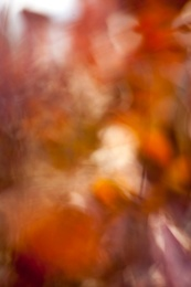 Autumn Crescendo 5